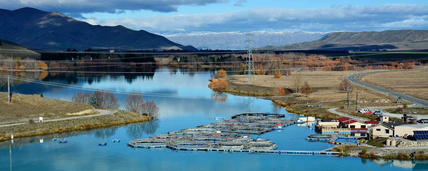 Image result for mt cook salmon