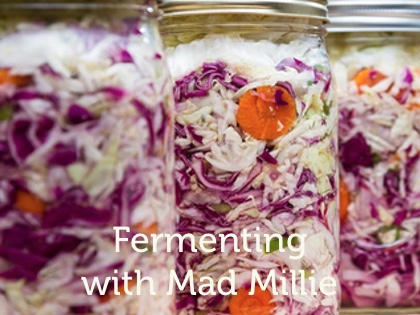 Teros Make your own fermented foods and drinks