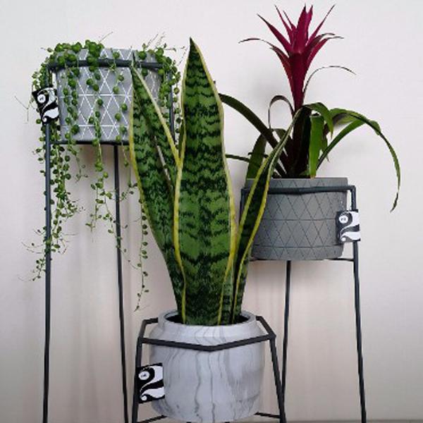 Shop Pots and Planters